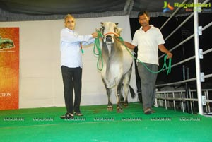 The Dream Bull Show